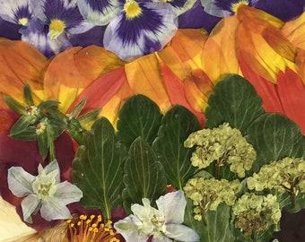 "Flower 08.18 Giclee Print 11""x14"""