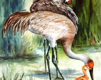 Sandhill Cranes watercolor print ACEO, A Family Affair, 935 Florida, Shorebird watercolorsNmore