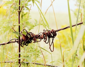 Nature Photography - Pretty Barbed Wire Fine Art Photograph - Irish Landscape Print - Quirky Fence Print