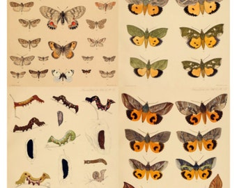 Butterflies V1 Collage Sheet, Vintage Book Page Illustrations, Dollar Deal - Digital Download JPG File by Swing Shift Designs