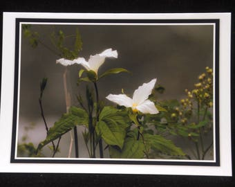 Trillium In Bloom 5x7 Blank Card By ThomasMinutoloPhotos