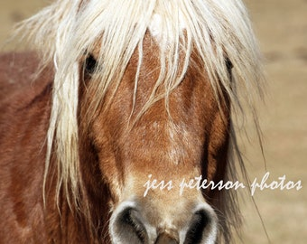 Horse Photography Canvas Gallery Wraps, Large Equine Animal Wall Art, Rustic Home Decor, Horse Lover Gift, Country Home Decor, Nursery Art