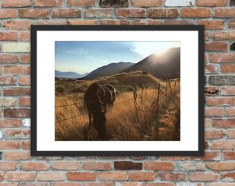 Horses grazing near the Utah mountains