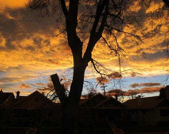 Sunset Tree Colorado