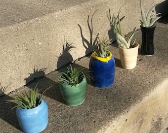 Air Plants in Unique Ceramic Pots