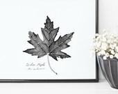 Silver Maple Tree Leaf Pr...