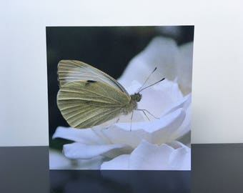 Cabbage butterfly on a white rose - folded greeting card, blank inside