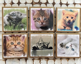 COASTERS!! Set of 6 cat coasters with gold trim