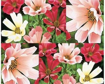 SeaShells Cosmos bipinnatus - SeaShells Cosmos Flower Seeds ~ The Mexican Aster - SEA SHELL PETALS - Zones 3 - 9, Choose From 150 or 4,000