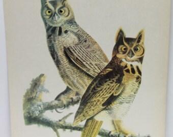 vintage bird image,great horned owl image,vintage owl image,bird image,great horned owl,home decor,man cave,man gift,vintage owl image