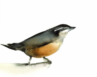 Nuthatch Archival print of original watercolor- bird art, cottage chic, shabby chic