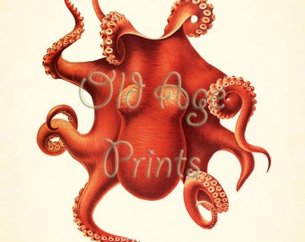 Antique Nautical Print Vintage Large Red OCTOPUS 11x14 Art Print Sea Life Ocean Creatures Natural Science Beach House Wall Decor LOL0404