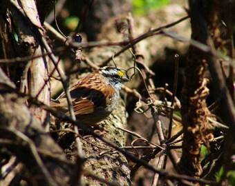 Sweet little bird photograph