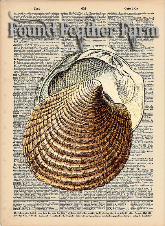 """Vintage Antique Dictionary Page with Antique Print """"Shell Five"""""""