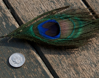 peacock feather Pin - peacock brooch - peacock jewelry - peacock accessories - peacock