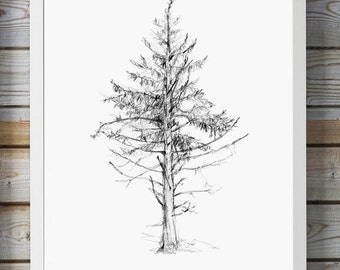 Pine Tree Pencil drawing - Giclee print - Home Decor - Tree sketch - tree illustration - Zen drawing - Christmas tree sketch forest art
