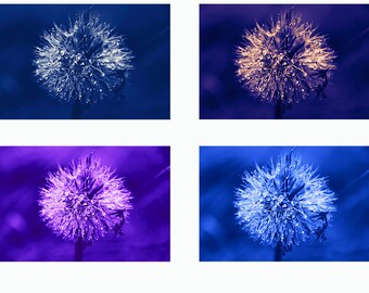 Photo set. color gradients. 4 Photography.