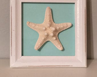 Tabletop Starfish Picture