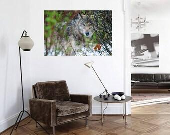 Grey Wolf Photograph, Alberta Print, Large Wildlife Photo on Canvas, Wildlife Photography, Wolf Print, Canadian Wildlife Print, Cottage Art