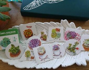 Sticker Set Succulents 40 pcs