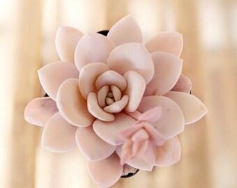 Echeveria laui, 10 seeds, rare succulent, pink succulent, succulent