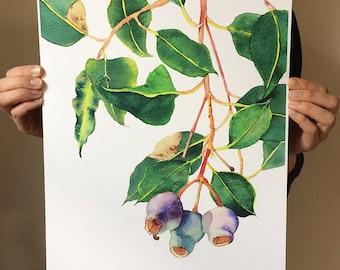 Gum nuts botanical print A3; purple & green nature home decor; Australian native plant watercolour wall art print; housewarming gift
