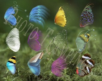 12 Butterfly Wing Overlays
