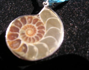 Ammonite Fossil Pendant -- one for 19 dollars, 3 for 50 FunkyAlternativeJewelry, Buddhists of etsy, SupportingArtists, OlympiaEtsy, WWWG