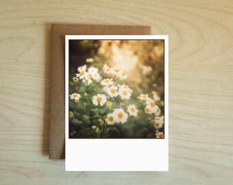 Chamomile Flower Card. Nature Cards. Greeting Cards. Any Occasion.
