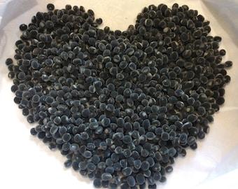 200 Drilled Mgambo Seeds