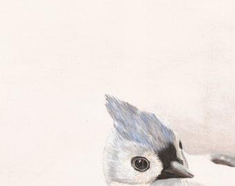 Titmouse Bird Print - Gray and White Neutral Colors - Garden Wildlife Series - 8x10