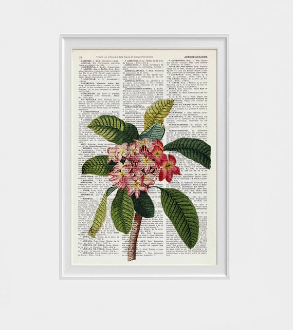 Plumeria Flower book print Floral Book print Upcycled book page, wall art book frangipani print, exotic flower art BFL217