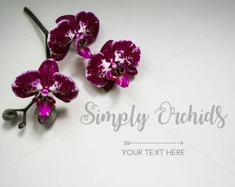Styled Stock Photography   Orchids on White Background   Instant Download