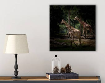 Giraffe Photography Wall Art - Nature Photography Canvas - Giraffe Wall Decor -  Zoo Animals - Giraffe Canvas - Animal Lover Gift