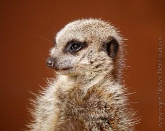 Meerkat photo print - 8x10 inches (20x25cm) - fine art wildlife nature photography, African safari animal, cute nursery art