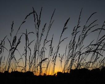 grasses in silhouette  8x10 photo