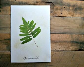 Sensitive Fern Real Pressed Botanical Art