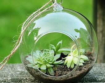 Klar hängen Blumen Pflanze Vase Terrarium Glaskolben 8cm