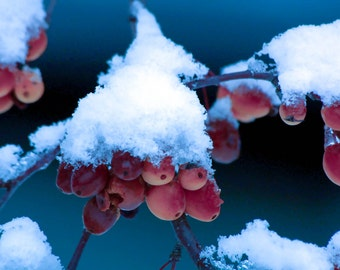 Snow, Winter, Nature Photography