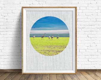 "landscape photography, large art, large wall art, instant download printable art, nature photography, nature prints - ""Sandhill Cranes"""