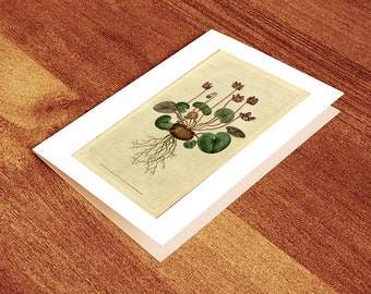 Blank Greeting Card of Botanical Print - Cyclamen coum (Round-leav'd Cyclamen)  1787. Vintage Home Deco Style Old Wall Reprint