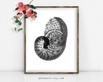 Télécharger PEARLY NAUTILUS SHELL - image numérique - illustration de coquille de mer antique imprimable grande réorganisée pour transfert d'image - totes, oreillers
