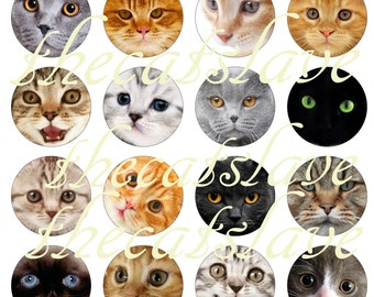"Cats and Kittens, Cat Pins, Cat Magnets, Adorable Kitties, Cats 1"" Flat Back Buttons, Pins, or Magnets, Cabochons,  12 Ct."