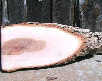 Live Edge pecan wood slab for projects LARGE 30 long x 12 wide 1 1/2 thick