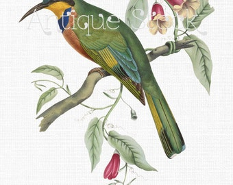 Bird Clipart 'Blue-breasted Bee Eater' Digital Download Image for Craft Projects, Wall Art, Collages, Transfers, Scrapbooking, Invites...