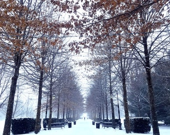 Winter wonderland snowy trees snowstorm snow covered walk lane path canvas art Christmas grand alle new year festive photography