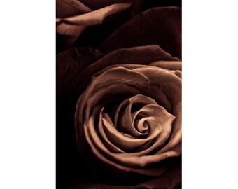 Rose Art, Gold Black Wall Art,  Flower Photography, Rose Print, Abstract Floral Art Print
