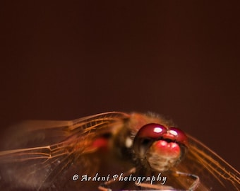 Red Dragonfly Art Photograph Close Up Macro Nature