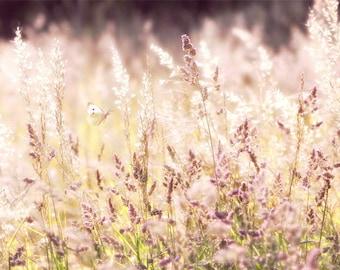 Nature Photography, Summer Meadow, Sunny, Butterflies, Dreamy, Wall Art, Home Decor.