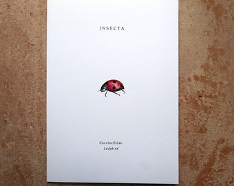INSECTA Ladybird